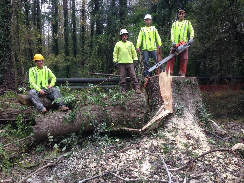 Arborex Tree Team