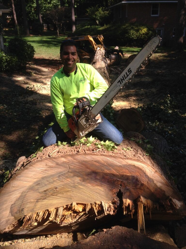 Tree Removal Raleigh NC