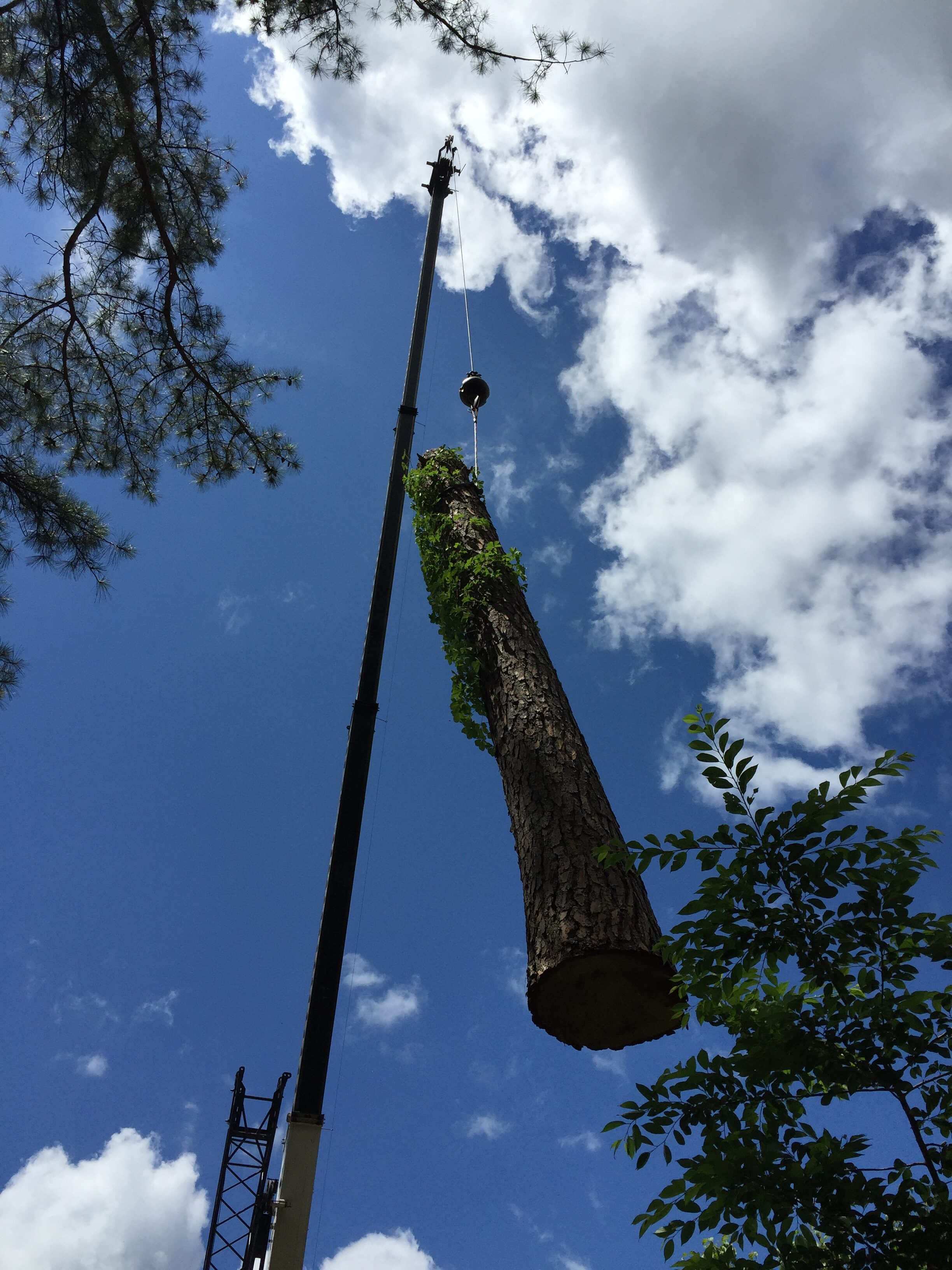 Tree Trunk Airlifted by Crane Raleigh NC