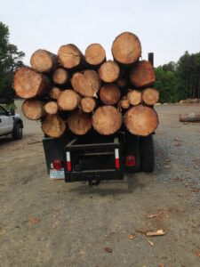 Tree Trunk Disposal Raleigh NC