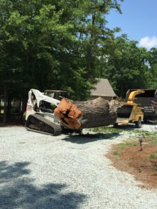 Large Tree Removal Raleigh NC