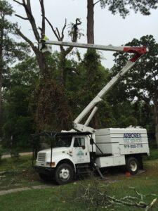 Arborex Crane Tree Removal Raleigh NC