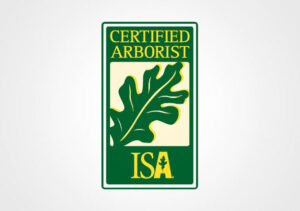 Certified ISA Arborist Raleigh Cary NC