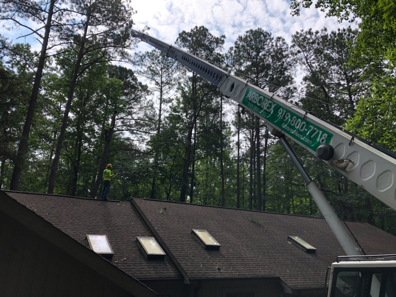 Dangerous Tree Removal Raleigh NC